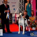 Dog German Arlechin Euro Dog Show 2012 Romania