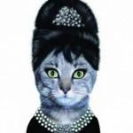 Animale costumate - pisica Audrey Hepburn