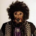Animale costumate - caine Jimi Hendrix
