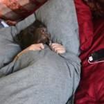 O viata de caine - VIDEO amuzant caini