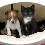Catelusa si pisicuta se cred surori