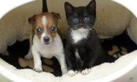 8 fotografii cu o catelusa si o pisicuta ce se cred surori