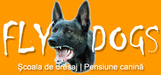 Scoala de dresaj Fly Dogs – Sibiu